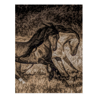 western cowboy rodeo Galloping wild horses Postcard