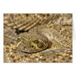 Western Diamondback Rattlesnake Greeting Card