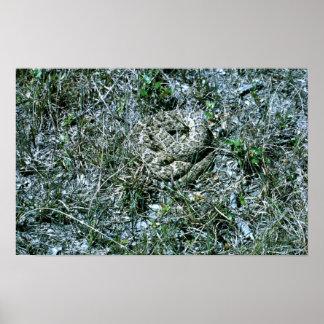Western Diamondback Rattlesnake Posters