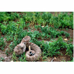 "Western Diamondback Rattlesnake Statuette<br><div class=""desc"">Western Diamondback Rattlesnake