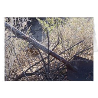 Western Fence Lizard Card