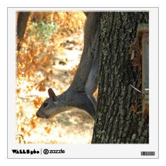 Western Gray Squirrel Wall Decal