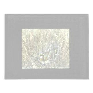 Western Grebe Card