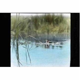 Western grebe photo cutouts