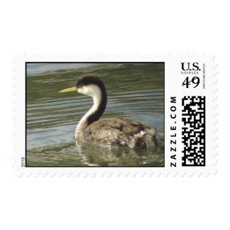 Western Grebe Stamp
