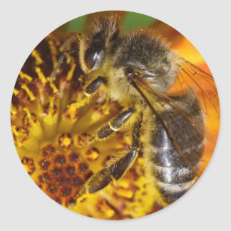 Western Honey Bee Classic Round Sticker