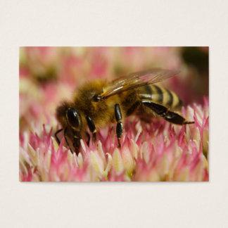 Western Honey Bee Macro Business Card