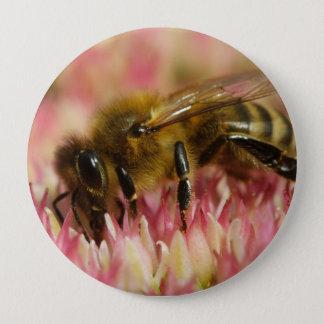 Western Honey Bee Macro Button