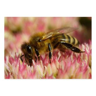 Western Honey Bee Macro Large Business Card