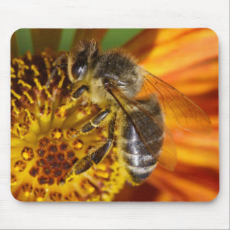 Western Honey Bee Macro Mouse Pad