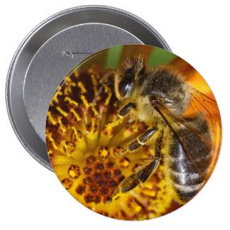 Western Honey Bee Macro Photo Button