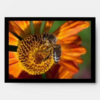 Western Honey Bee Macro Photo Envelope