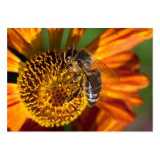 Western Honey Bee Macro Photo Large Business Card