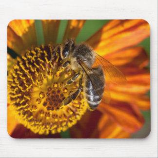 Western Honey Bee Macro Photo Mouse Pad