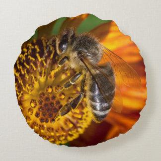 Western Honey Bee Macro Photo Round Pillow