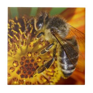 Western Honey Bee Macro Photo Tile