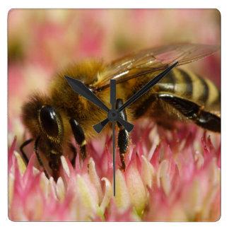 Western Honey Bee Macro Square Wall Clock
