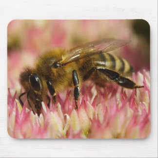 Western Honey Bee Mouse Pad