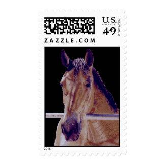 Western Horse Birthday Stamp
