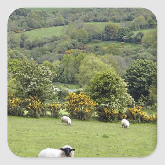 Western Ireland, Dingle Peninsula, broad Square Sticker