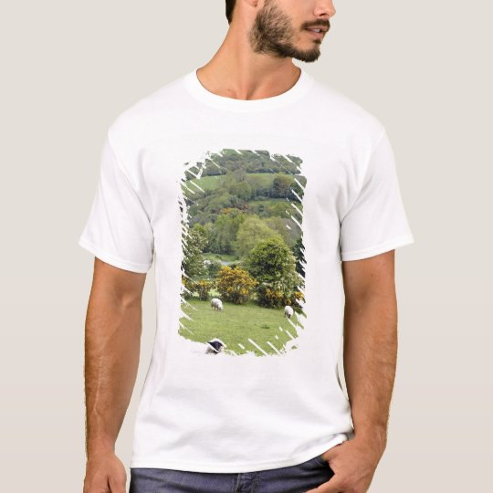 Western Ireland, Dingle Peninsula, broad T-Shirt