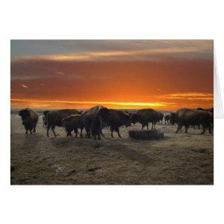 Western Kansas Bison Sunset Card