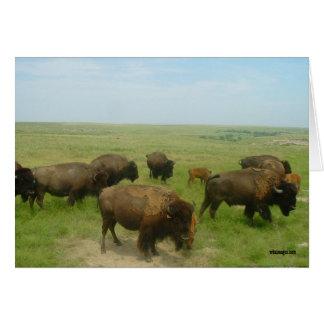 Western Kansas Buffalo Greeting Cards