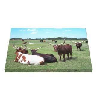 Western Long Horn Bull Cow Cattle Wrapped Canvas