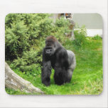 Western Lowland silverback male gorilla Mouse Pads