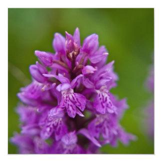 Western Marsh Orchid Card