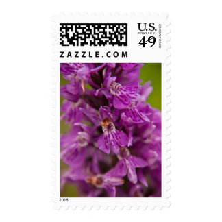 Western Marsh Orchid DSC1883 Postage Stamps