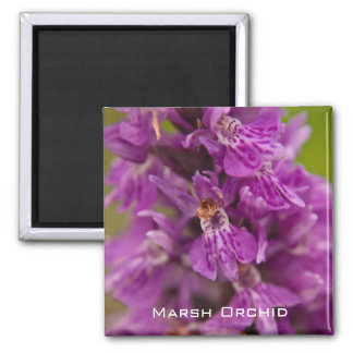 Western Marsh Orchid Magnet