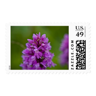 Western Marsh Orchid Stamp