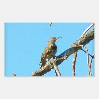 Western Meadowlark Rectangular Sticker