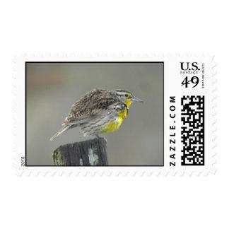 Western Meadowlark stamp