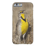 Western Meadowlark (Strunella neglecta) in Barely There iPhone 6 Case