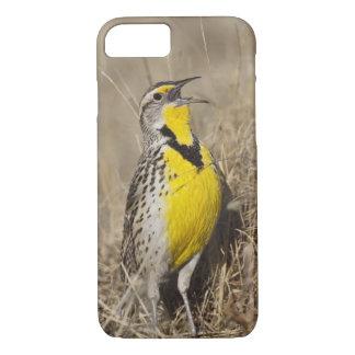 Western Meadowlark (Strunella neglecta) in iPhone 8/7 Case