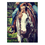 Western Paint Horse Postcard