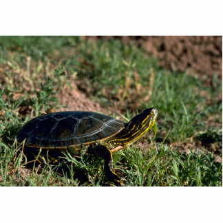 Western Painted Turtle Cutout