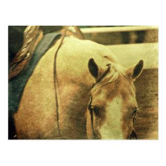 Western Palomino Postcard