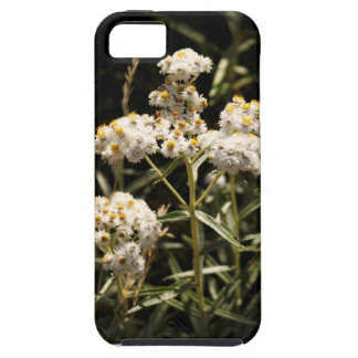 Western Pearly Everlasting Wildflower Photo iPhone SE/5/5s Case