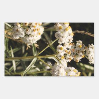 Western Pearly Everlasting Wildflower Rectangular Sticker