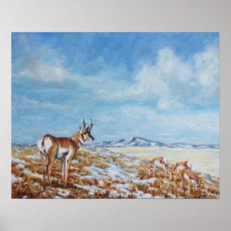 Western Plains Camouflage Fine Art Print