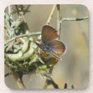 Western Pygmy Blue Butterfly Coasters