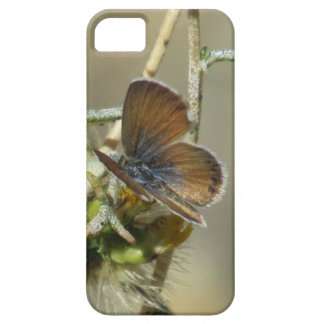 Western Pygmy Blue Butterfly iPhone 5 Case