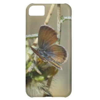 Western Pygmy Blue Butterfly iPhone 5 Case