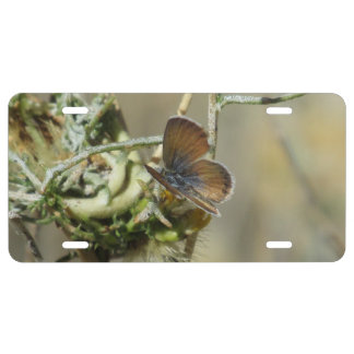 Western Pygmy Blue Butterfly License Plate