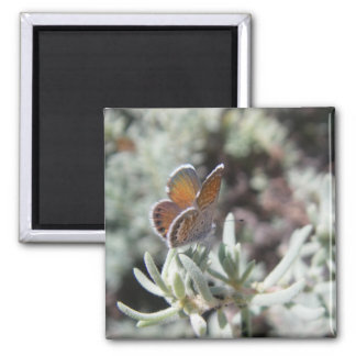 Western Pygmy Blue Butterfly Photo Magnet