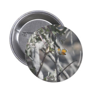 Western Pygmy Blue Butterfly Pinback Button
