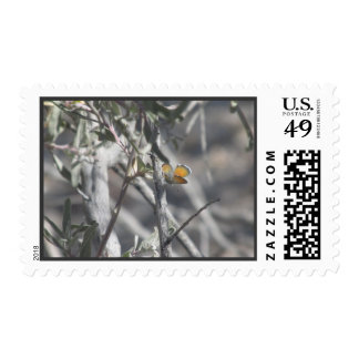 Western Pygmy Blue Butterfly Stamp